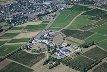 Vues aériennes de Montreuil-Bellay