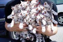 KittensKittensKittens / by Kelli Gerking