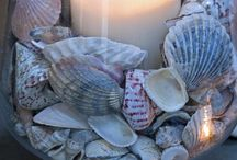 Sea shells( & ideas )