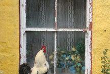 animali in fattoria