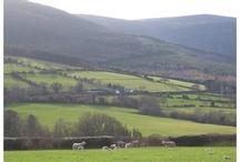 Irish Hearts / Motive zu meiner Irland-Reihe mit Jack und Fiona #IrishKisses #IrishRomance