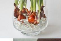 virág hagymák vázába