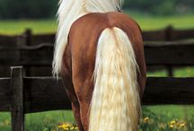 Manes and tails