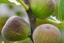 aus Kerne Pflanzen züchten