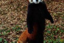 animals exotics / animals mol raros