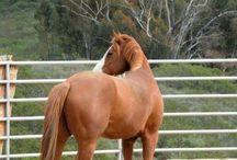 Horse training/exercise