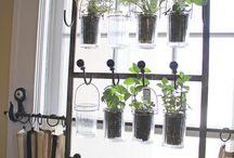 plants & greens.