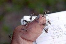 trappole per zanzare e vespe