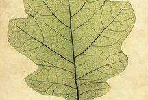 Leaves n trees