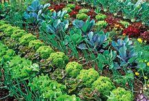 Garten und andre Ideen rund ums Haus
