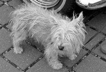 PERROS — Lo que debes saber / INGRESA AQUÍ y encuentra toda la información que buscas sobre los cuidados necesarios para los perros adultos y cachorros. Trucos, concejos y respuesta a tus dudas frecuentes.