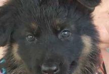 Wolf dogs ❤️❤️❤️❤️❤️