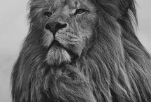 animais maravilhosos e lindos