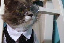gato oculos