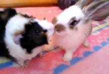 Pets ♡♡ / O moich pupilkach