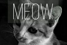 Cat / My photo