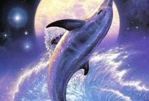 Delfín de la noche