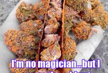 Stoner Quotes / Funny marijuana quotes and beautiful marijuana flowers.