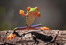 Nature - Frogs / Weather