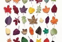 foglie / Foglie foglie foglie