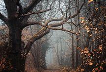 Magic Grove