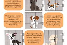 Infographics For Rescuing Dogs / Approximately 7.6 million companion animals enter animal shelters nationwide every year. Of those, approximately 3.9 million are dogs and 3.4 million are cats. Each year, approximately 2.7 million animals are euthanized (1.2 million dogs and 1.4 million cats).
