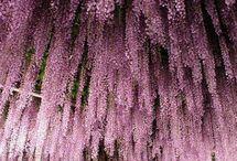 árboles y flores