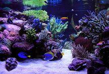 Aquarium, Akvárium