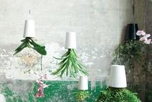 Unique and Decorative Lifestyle Pieces