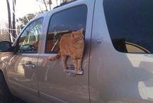 Koty / Słodkie kotki