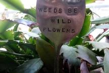 Garden ideas / Ideas for our boring garden