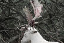 DA Dalish Elves
