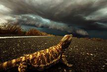 Storms photos / Photographer of storms, Nick Moir.