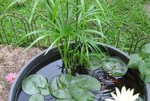 Acquatiche e piante