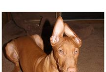 All Things Dogs / ALL THINGS DOGS: Dog training tips, dog health, dog accessories