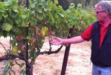 Food and Wine Videos / Winemaker and food videos with Renwood staff and stars