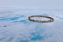 Travel: (An)arctic