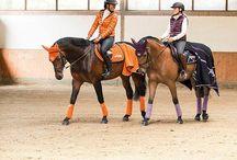 Ridning & hästar