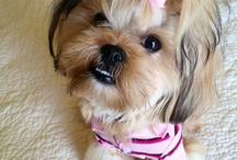Pixie Is Cute