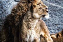 Majestic creatures