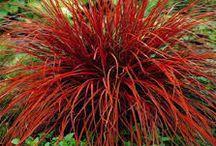 Landscaping plants - simon
