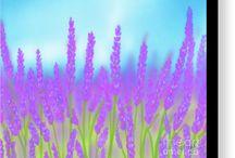 Lavender Bliss!