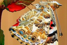 Butterflies / by Tyra Mefford