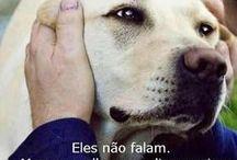 Sentimentos dos Animais