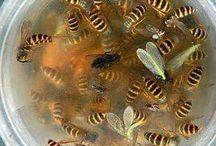 Get rid wasps
