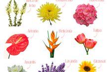 flores nomes e afins
