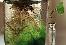 Aquariums & Plants