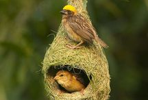 aconchedo do ninho/Nest snuggling