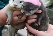 Otters / Otters are competing with alpacas for my favorite animal