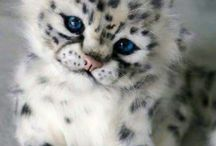 SNOW○LEOPARDS